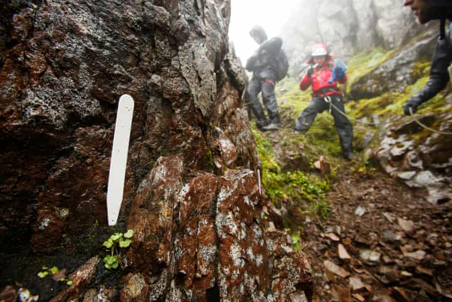 NTS botanist Dan Watson and geologist Ali Austin of the John Muir Trust record a host of rare plant finds on the north face of Ben Nevis.