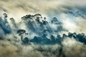 Landscapes, second place: Florian Smit, 'Rainforest' (Danum valley, Borneo)
