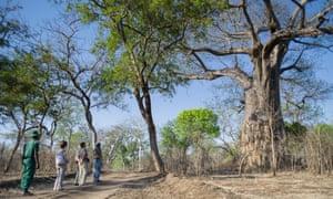 Majete wildlife reserve in Malawi.