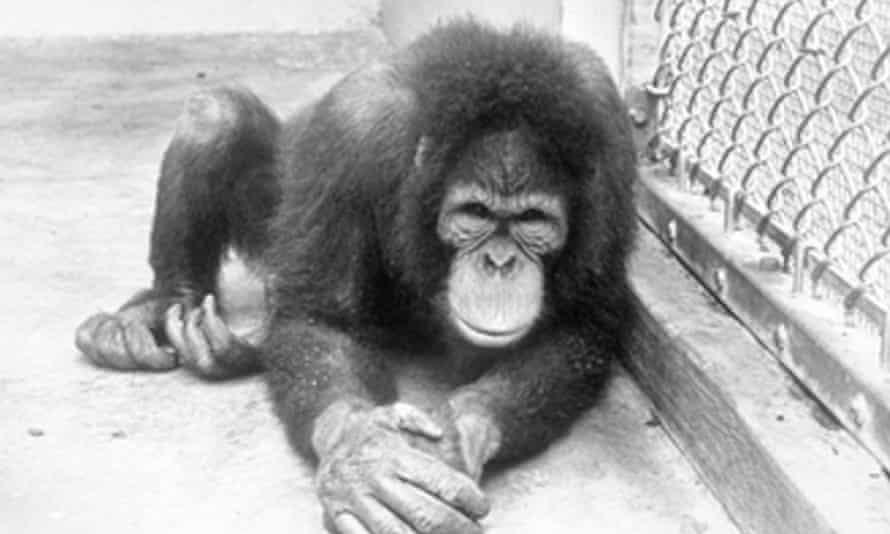 Primate.