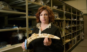 Coleen Schaefer stands for a portrait with some of the elephant ivory contained inside the National Wildlife Property Repository in Commerce City, Colorado, U.S., on Wednesday, May 31, 2017. Photographer: Matthew Staver