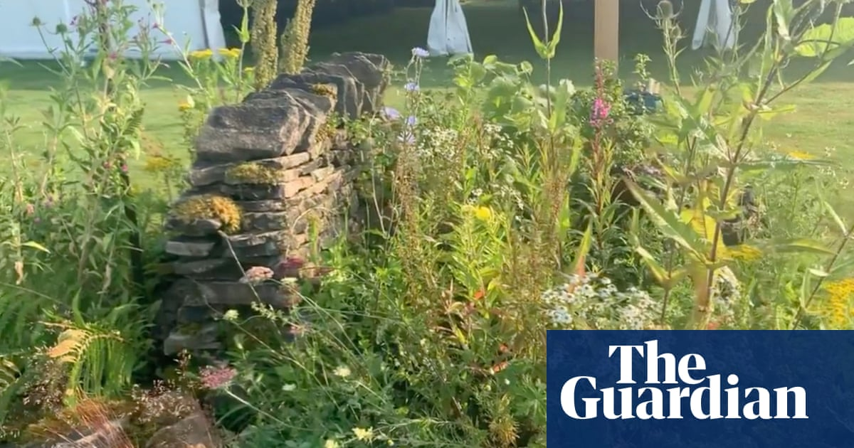 Biodiversity bonanza! Why it is time to let weeds go wild in our gardens