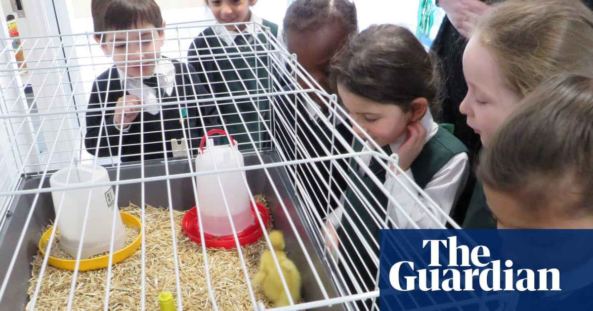 Should pets ever be kept in classrooms?