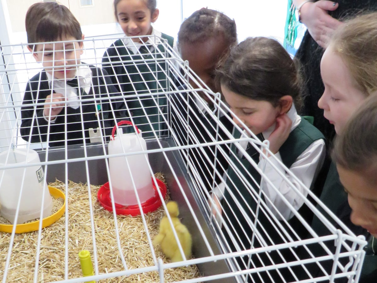 Should Pets Ever Be Kept In Classrooms Schools The Guardian