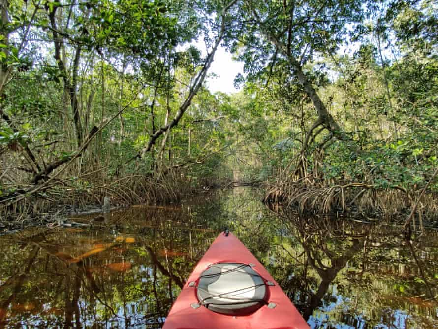 A mangrove tunnel in Florida's Everglades National Park.