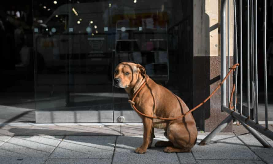 Bring him in: dog-friendly shops mean you won't have to leave Rover tied up outside.