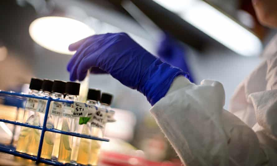 A microbiologist works with tubes of bacteria samples in an antimicrobial resistance research lab.