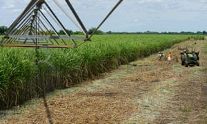 A sugar cane plantation in Lamego, Mozambique.