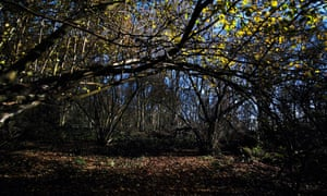 Glyn Davies Wood nature reserve