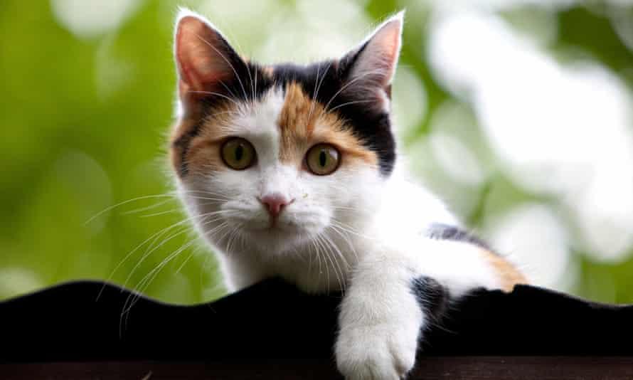 Joe Biden's wife, Jill, said: 'Well, I'd love to get a cat. I love having animals around the house.'