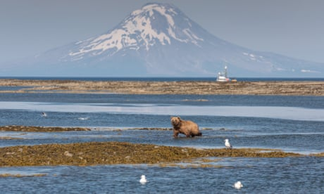 A proposed mine in Alaska will endanger brown bears – and much more