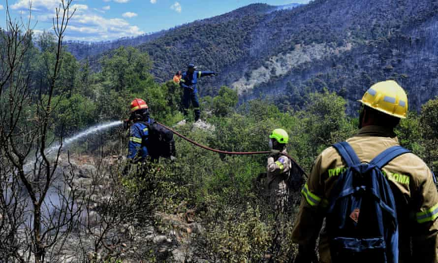 Firefighters tackle the blaze in an area of pine forest  near Loutraki.