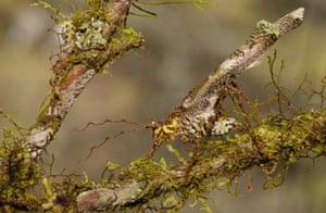 The lichen look