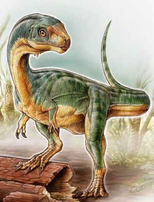Chilesaurus – despite its penchant for plants – was lumped together with theropods. Research shows it is an offshoot of the ornithischia instead.