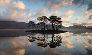 Scots pine trees reflected in Loch Maree at dawn with Slioch in background, Wester Ross, Scotland, UK, November 2014.p840m2003967/ Scots pine trees reflected in Loch Maree at dawn , Glen Affric