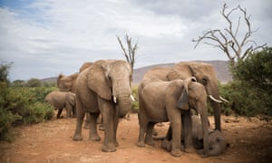 The Samburu National Reserve