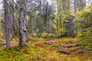 Greens and reds of natural forest bed with trees sustaining mushrooms.