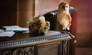After the attack the owl then perched on the table used for signing the wedding register.