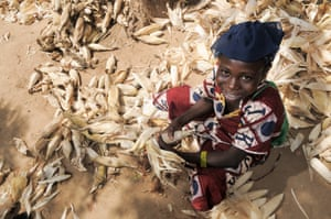 11 year old schoolgirl Djeneba peeling the corn which her family has harvested.