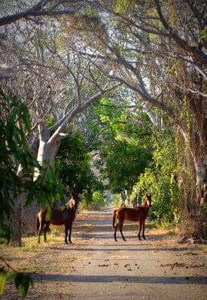 Horses at Oombulgurri