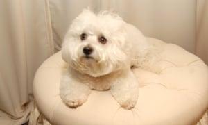 Barbra Streisand's dog Samantha