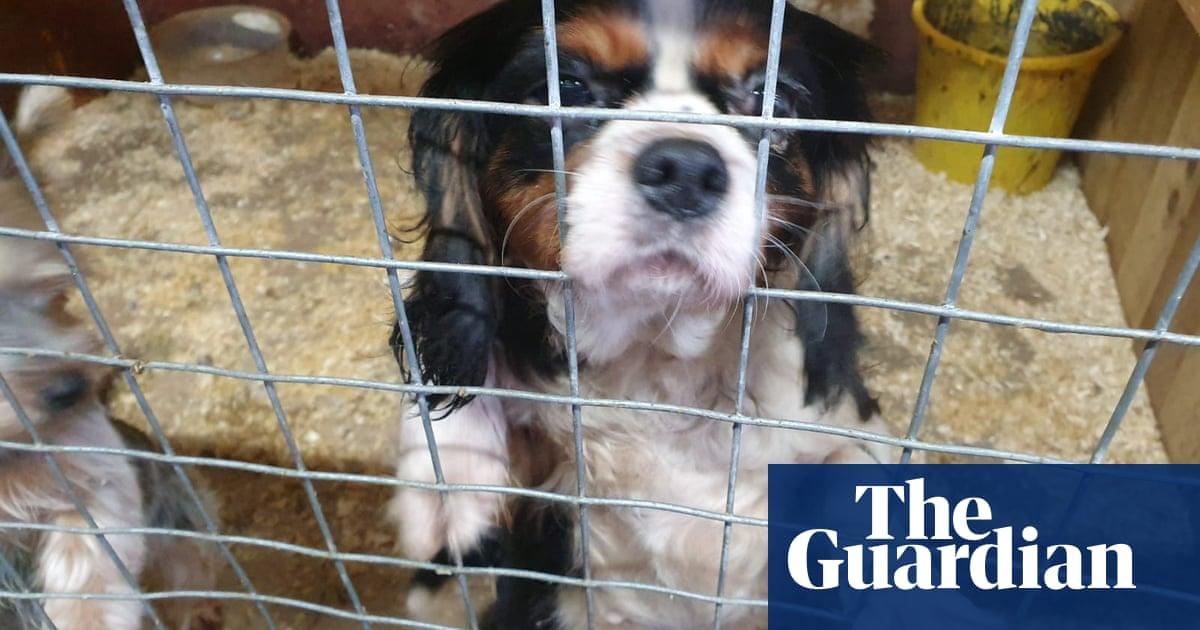 'The new drugs': Northern Ireland gateway for £150m illegal puppy trade