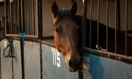 'Every time I have been around a fire in a horse area, it is amazing to me how the equestrian community rallies.'