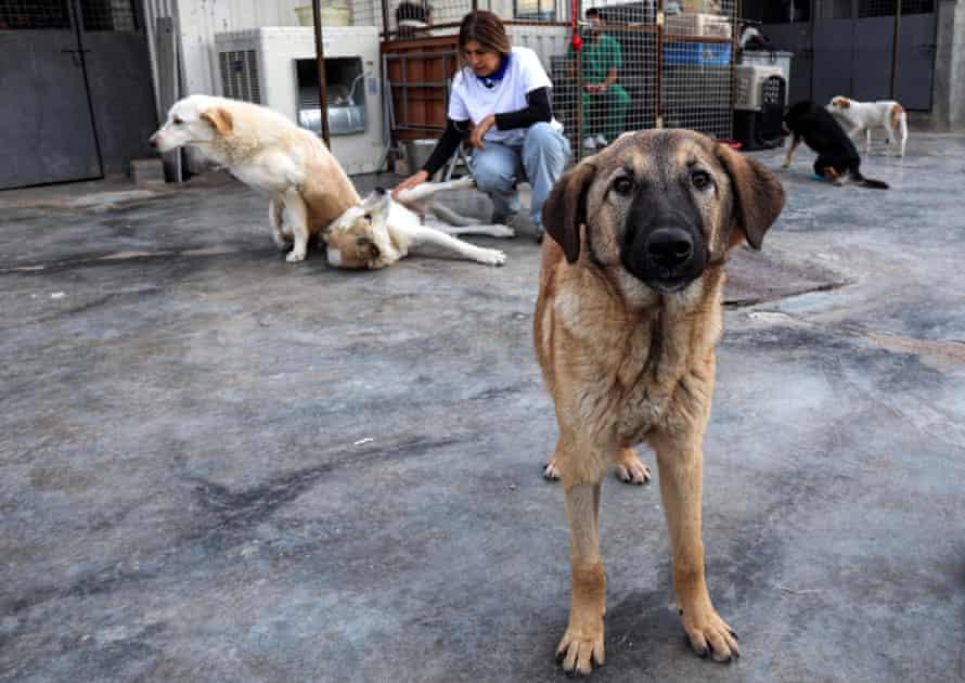 Ashti Kakaye, in background, supervisor of an animal shelter, at a volunteer animal facility in Erbil.