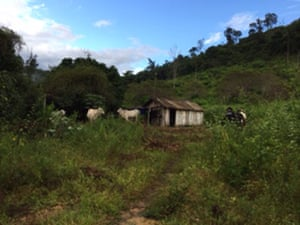 Cattle on Cassio Vieira's ranch