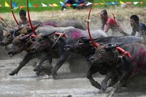 ThailandJockeys compete in Chonburi's annual buffalo race festival, in Chonburi province