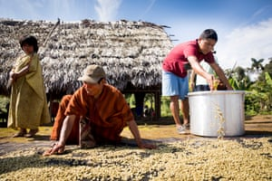 Andy Peña helps wash coffee beans with members of the Tankoari community in the Amazon rainforest, Peru. Cool Earth rainforest charity pays for coffee technicians like Alex to be trained, to raise the quality of coffee produced in the area.