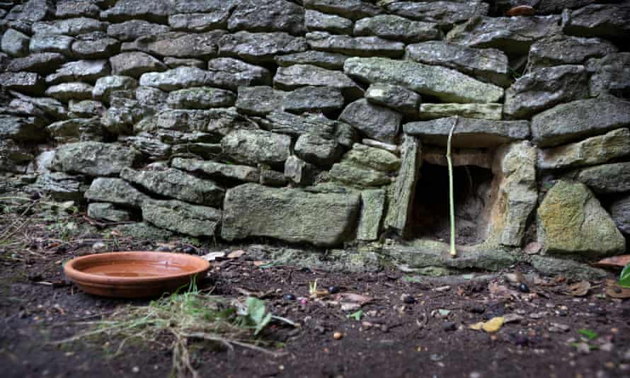 A stick is left against a hole to monitor movements along Hedgehog Street