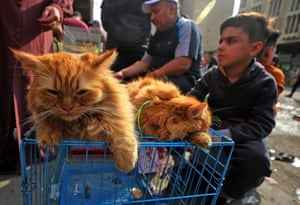 A boy sits next to cats for sale at al-Ghazl market in Baghdad, Iraq
