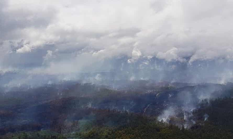 Fires burn through ancient old-growth forests –home to many threatened animal species – in Tasmania in January. Experts say more needs to be done to protect old-growth forests from logging and climate change.