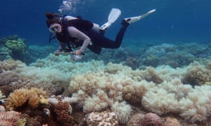Coral reefs are suffering from rising temperatures killing both the corals and the huge number of species that live in and around the reefs.