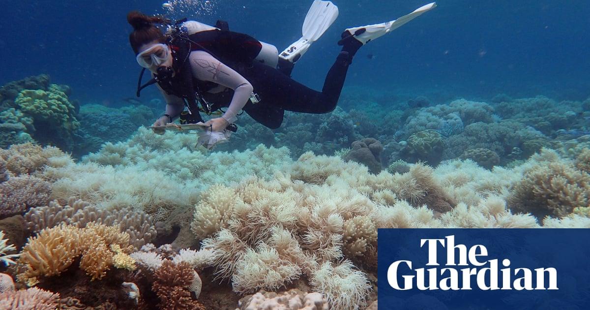 Great Barrier Reef: leading scientists praise Unesco's 'in danger' warning