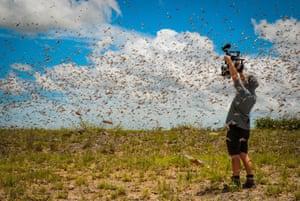 Cameraman Rob Drewett in the midst of a super-swarm of locusts in Madagascar