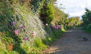 Hedgerow along a lane