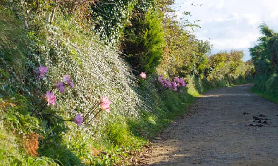 Hedgerow along a lane