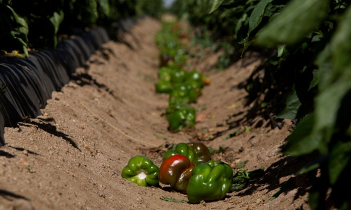 Half of all US food produce is thrown away, new research