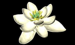 A reconstruction of the flower of the predicted ancestor of all flowering plants.