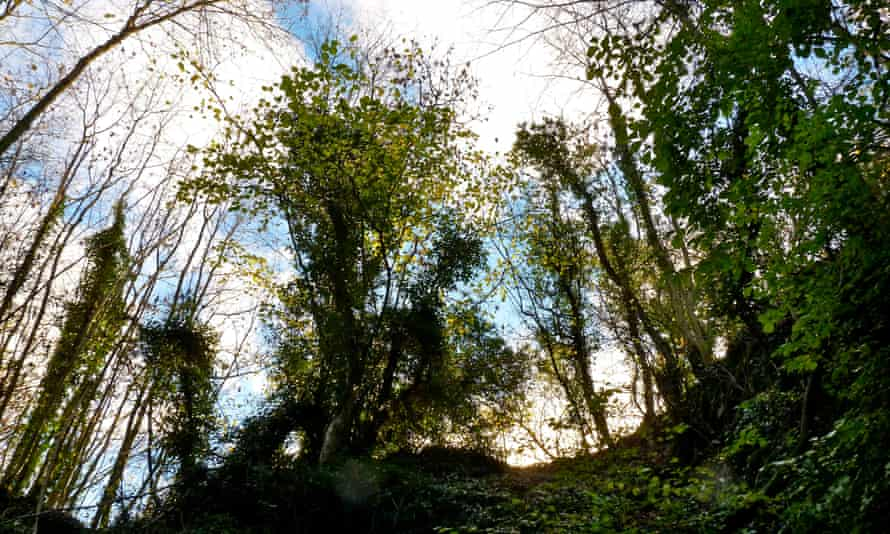 The dark green space of the quarry is like a derelict church, a hole in which to tip the imagination.