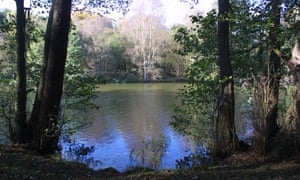 Lake view fringed by trees in Clumber Park.