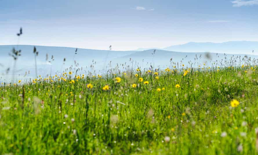 Green hills and meadow with wild flowers in hills, mountains, countryside. Romania, Transylvania, Harghita.