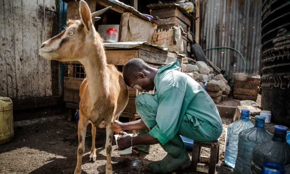 Urban Farming Huruma Nairobi Kenya 022