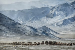 They move about a thousand animals including yaks, camels, goats and eagles