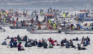 Noia, SpainHundreds of shellfish gatherers take part in the first day of the Seafood campaign of the cockle and the clam in Galicia, northwestern Spain