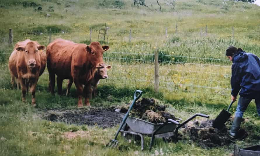 Tamsin Calidas digging with several cows watching her