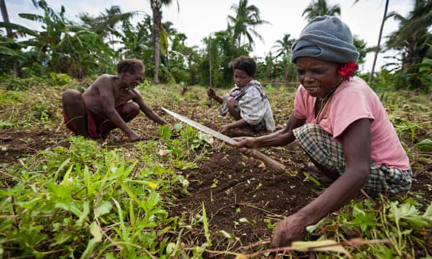 agta people at work in a field in luzon the philippines