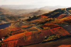 An autumnal glimpse of vineyards near Alba in the Langhe hills of Piedmont.